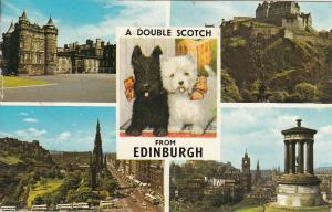 Edinburgh a double scotch puppy dogs & multi views postcard 1968