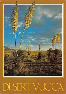 Desert Yucca -