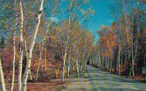 The Highway Through The Majestic Shelburne Birches Of New Hampshire 1961