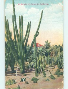 Divided-back CACTUS GROUP Postmarked Los Angeles California CA AD8316