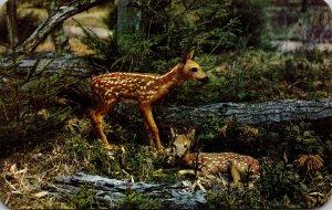 Deer Baby Fawns Dextone Beauty Series