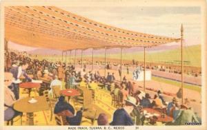 1940s Interior Race Track Tijuana Mexico BC postcard 2725