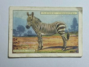 CIGARETTE CARD - PLAYERS NATURAL HISTORY #12 MOUNTAIN ZEBRA   (UU477)