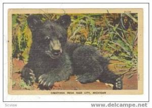 Black Bear Cub On Ground, Reed City, Michigan, 30-40s