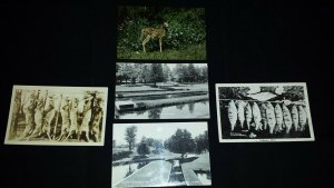 Lot of 5 Collectible Postcards Wild Life Fish Deer