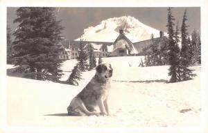 Timberlake (Government Camp) OR~Lady St Bernard Content on Snowy Day~RPPC 1928