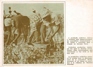 BG20814 mocambique mozambique agriculture collective production reinforces types