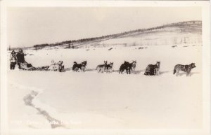 Alaska Dog Sled Team Real Photo sk5517