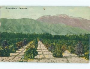 Divided-Back ORANGE GROVE BY THE MOUNTAINS Postmarked Los Angeles CA E9914