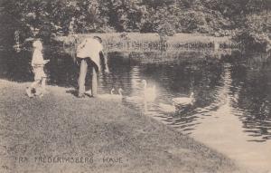 Park, Swans, Fra Frederiksberg Have, Copenhagen, Denmark, PU-1929