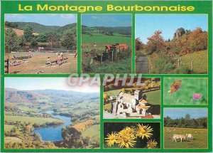 Modern Postcard The Bourbon mountains of Auvergne Image Cows