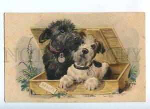 189442 SCOTTISH TERRIER & FOX Terrier DOG by EDE Vintage PC