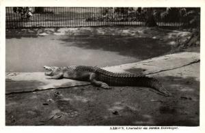 CPA Vietnam Indochine COCHINCHINE Saïgon - Crocodile au Jardin Botanique (62655)