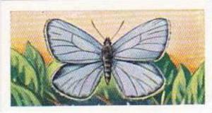 Swettenhams Tea Vintage Trade Card Butterflies & Moths 1958 No 16 Light Blue