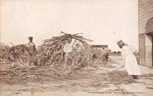 Barbados Feeding The Sugar Cane Mill