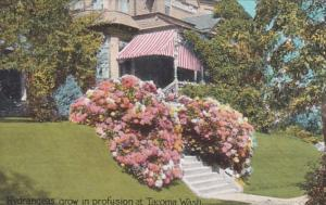 Washington Tacoma Residential Scene With Beautiful Hydrangeas