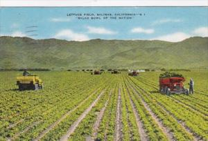 California Salinas Typical Lettuce Field 1945