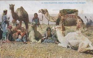 Palestine: Group of Camels in the Desert , 00-10s