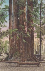 Cathedral Group Big Trees Santa Cruz California Handcolored Albertype