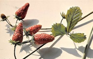 Monthly Strawberries Fruit Assorted Unused