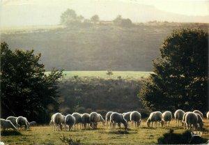 Animals Postcard Sheep herd hills cottage trees