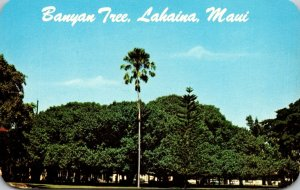 Hawaii Maui Lahaina Giant Banyan Tree Planted 1873