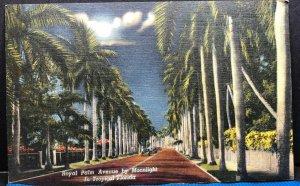 Florida Royal Palm Avenue Vintage Postcard