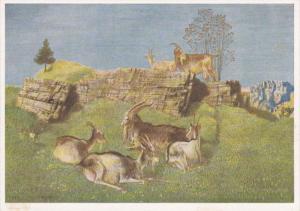 AS: Mountain Goats, 10-20s