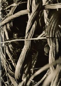 brazil Guiana Expedition Tumuc-Humac, Liana Amazones (1950s) RPPC