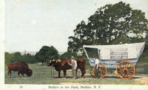 USA Buffalo in the Park Buffalo New York Ezra Meeker 06.29
