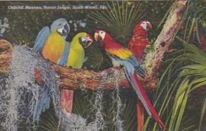 Colorful Macaws Parrot Jungle South Miami Florida