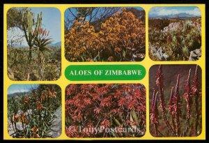 Aloes of Zimbabwe