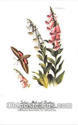 Sphinx Moth & Foxglove Artist RT Peterson Postcard Post Card Artist RT Peters...