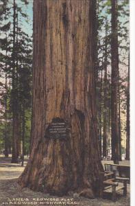 Lane's Redwood Flat On The Redwood Highway California Handcolored Albertype
