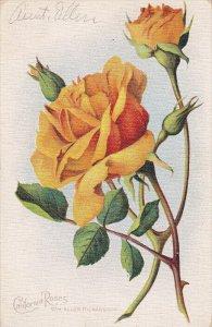 CALIFORNIA, PU-1911; California Roses, WM. Allen Richardson