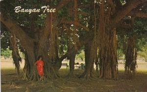Hawaii Maui The Banyan Tree At Lahaina 1969