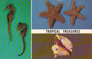 Tropical Treasures Seahorse Starfish and Conch