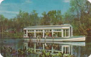 Florida Silver Springs Feeding The Fish 1953