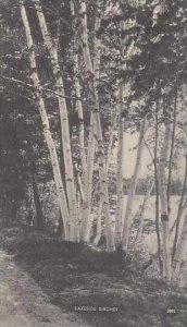Maine Portland Lakeside Birches Artvue