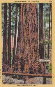 California Santa Cruz County Neck Breaker Big Trees Park