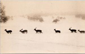 Herd of Deer in Snow Animals Wildlife Unknown Loc RPPC Real Photo Postcard E29