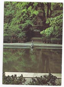 DuPont Winterthur Museum Gardens DE Clenny Run Narcissus 4X6