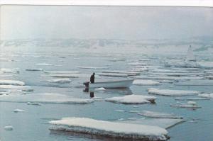 Ice Breakup , ST. ANTHONY , Newfoundland , Canada , 1950-60s