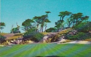 California Monterey Cypress Trees