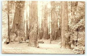 Postcard CA Cathedral Grove Muir Woods National Monument RPPC Zan Real Photo