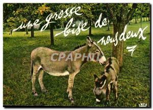 Modern Postcard A big kiss from us both (ass donkey)