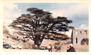 Cedars, Lebanon Postcard, Carte Postale Elevation 8,000 Feet Cedars Elevation...
