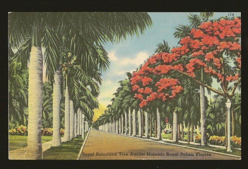 USA Poinciana Tree Amidst Majestic Royal Palm Florida Linen Postcard