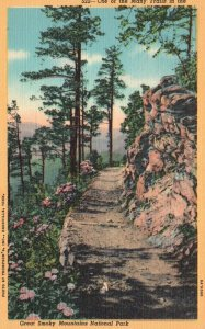 Great Smoky Mtns. Park, TN, One of Many Trails, 1938 Vintage Postcard h3855