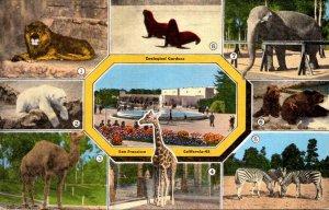 California San Francisco Zoological Gardens Elephant Giraffe Polar Bear Lion ...